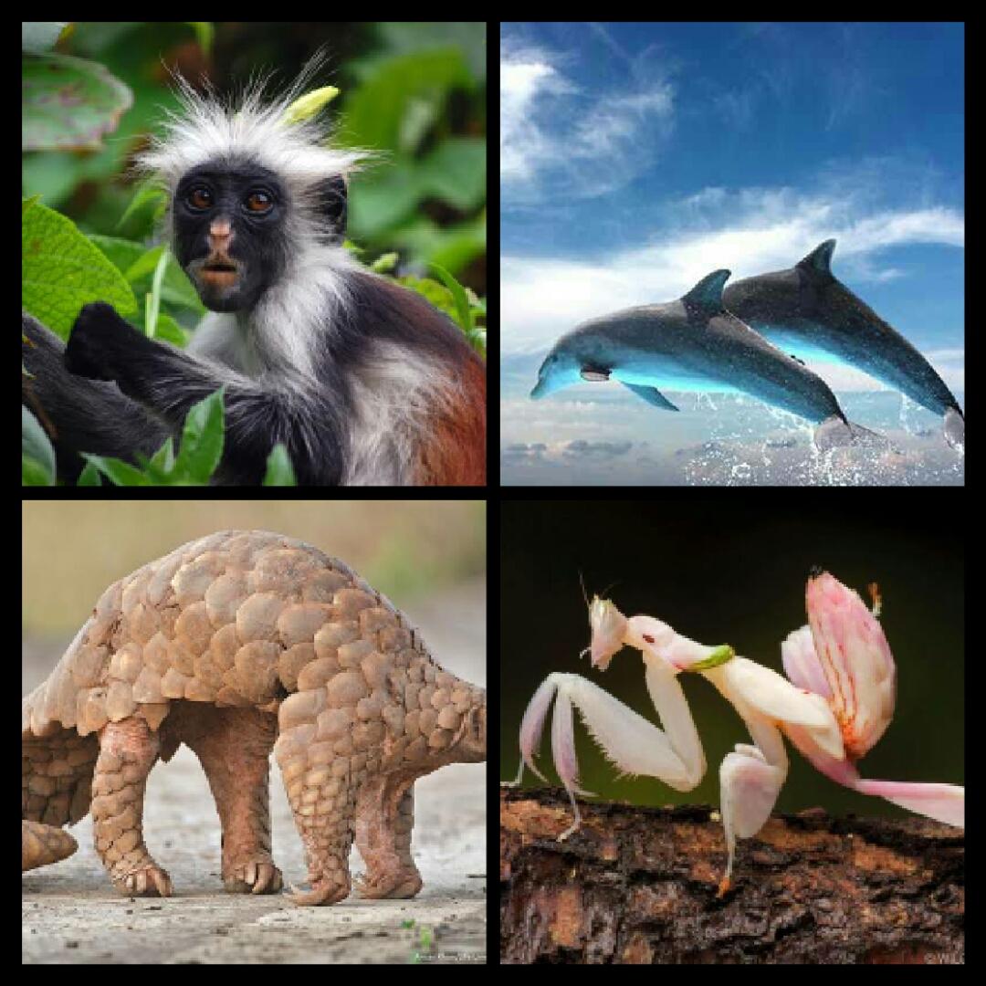 وہ پانچ جانور جنہیں ہم دوبارہ کبھی دیکھ نہیں پائیں گے